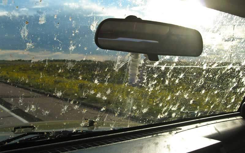 blog-windscreen-bugs